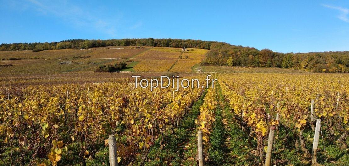 bourgogne route des vins vignes